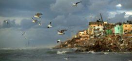 الطيور تلتهم ما بين 400 إلى 500 مليون طن متري من الحشرات سنوياً