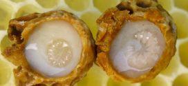 اهمية غذاء ملكات النحل